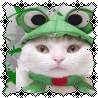 kristy: Kitty Froggy (Kitty Froggy)