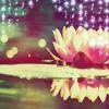 larnbean: (Lotus)