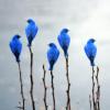 larnbean: (Birds)