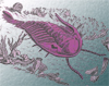 redbird: purple drawing of a trilobite (purple trilobite, trilobite)