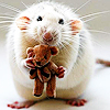 daydreamerexpress: Daw... (mouse & bear)