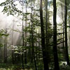 daydreamerexpress: Ancient days... (woods)