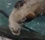 na_lon: (Swimming)