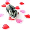 vampydirector: (Stock-Hamster Hearts)