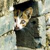 queenbarwench: (hiding kitty)
