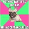beemayhem: (Fat Acceptance Frenchie loves us)