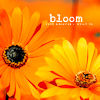 kez_fic: (bloom)