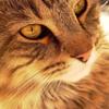 mific: (Possum close-up)
