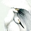 branwyn: (birds)