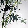 chickwriter: (Lanning - Bamboo)