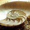 libelula: (Seashell)