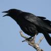 crowboy: (I'm a motherfucking crow)