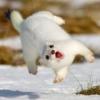 damselfish: (leaping stoat)