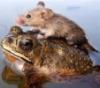 dcseain: (Mouse Frog)