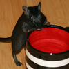 heritiere: (Gerbil   This is my cup)