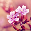 beach_baby: (Spring: Pink Flowers)
