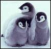 enotsola: (Baby Penguins)