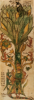 mildred_of_midgard: (Yggdrasil)