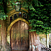 kaleidoscope_eyes: A door in the trunk of a willow tree, much like in our home world. (willow tree)