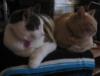 nisaa: (cats!)