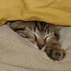 natf: (pixelasleep, sleep)