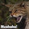 natf: (muahaha, lol-cat)