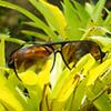 kahlan: (glasses!)