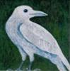 shippen_stand: White Crow (white crow)