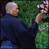 katsumoto: Katsumoto with cherry blossoms (life in every breath)