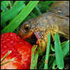 benedict: The happiest turtle in the world eats a strawberry. You are happy from knowing this happened. (:D)