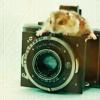 nikoljja: (мыша на фотоаппарате)