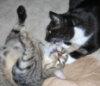 waywardcats: Dart loves Wonderbutt (boys)