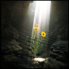 genarti: sunbeams lighting yellow flowers, surrounded by rocks and darkness ([misc] break in the clouds)