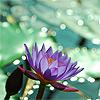 amazonmandy: (lily)