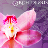 kirchara: Orchideous, orchid bloom (Default)