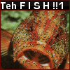 """ext_95695: Picture of a fish, """"teh fish!!1"""" (Fish)"""