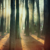 vorpal: Stock image of a forest with sunlight filtering through (forest)