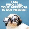 "talibusorabat: Puppy with glasses ""I am who I am. Your approval is not needed."" (Quote: Your approval) (Default)"