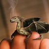 swordage: Teeny baby dragon curled on a person's fingertips. (asst wee critter)