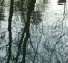 ext_287016: (pooloftrees pool trees reflection)
