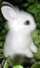 bunnybailey: (pic#295888)