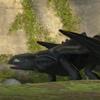 b2_dragon: (pet me)