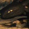 b2_dragon: (mine)