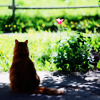 iphiro: A cat sitting in the shadows, looking out at a field. (pic#296392)