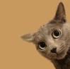 theantipam: (Peeking Kitty)