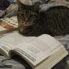 curiouslibrarian: (reading)