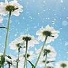 fantomas: (Flowers)