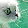 berrie: (cat)