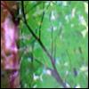 skywardprodigal: me and a green screen (meme-leaves)