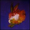 skywardprodigal: a colorful rabit on a blue field (meme-art is)